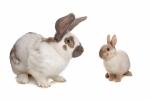 Kanin tilbehør